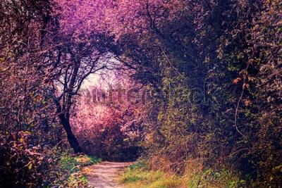 Fototapeta Letni krajobraz z chodnikiem w magicznym ogrodzie. Natura pejzaż tło