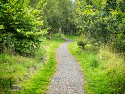 Fototapeta Letnia droga wiejska, Irlandia Północna