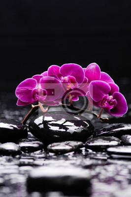 Leżąc na czerwonej gałęzi orchidei i czarnych kamieni