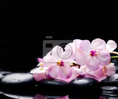 Leżąc na gałęzi biała orchidea z czarnymi kamieniami na mokrych kamyczkach