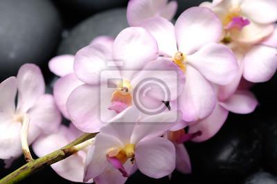 Leżąc na gałęzi orchidei na odbicie czarnych kamieni