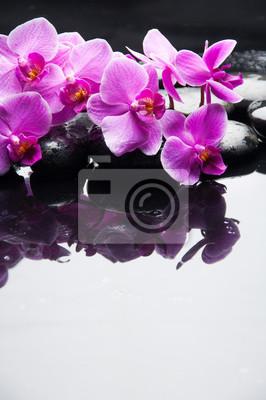 Leżąc na różowej orchidei oddział z czarnymi kamieniami na mokrej kamyki
