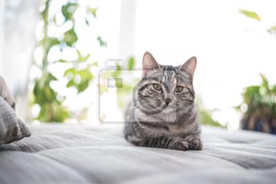 Fototapeta Liegende Katze