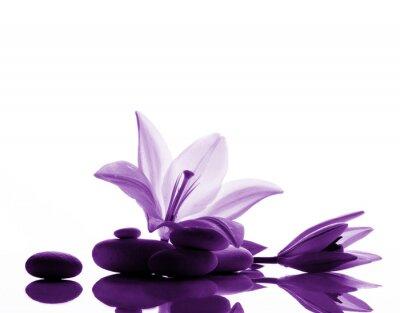 Fototapeta lily i kamienie