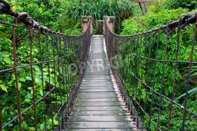 Fototapeta Lina przejścia przez napowietrzna w lasach tropikalnych