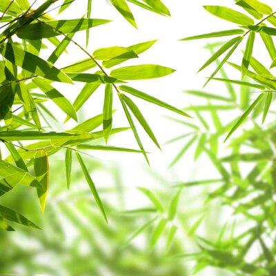Fototapeta liści bambusa samodzielnie na białym tle