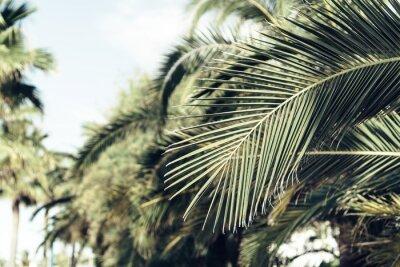 Fototapeta Liści palmowych tle nieba