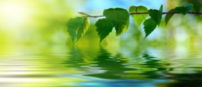 Fototapeta liście brzozy i wody