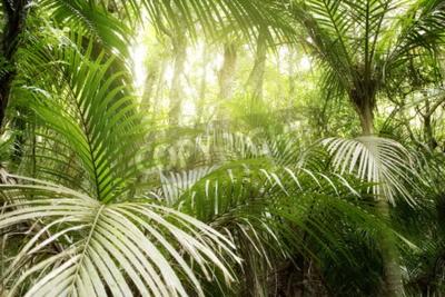 Fototapeta Liście zielonych liści w tropikalnej dżungli