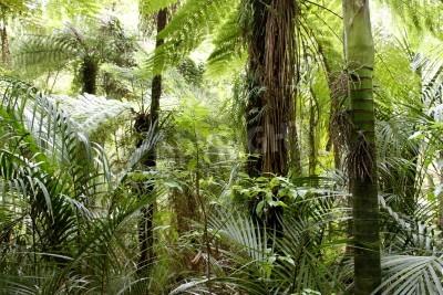 Fototapeta Liście zielonych liści w tropikalnym lesie