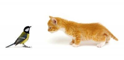 Little beautiful funny kitten and bird
