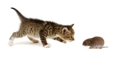 Little beautiful funny kitten and mouse