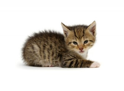 Little beautiful funny kitten on white