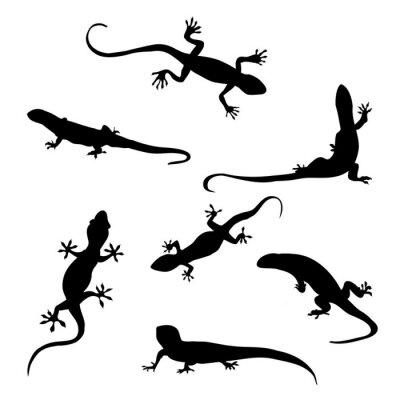 Fototapeta Lizard sylwetka