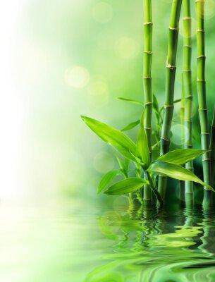 Fototapeta Łodygi bambusa nieostre na wodzie -