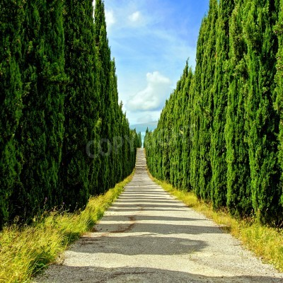 Fototapeta Looking down a long cypress lined street in Tuscany, Italy