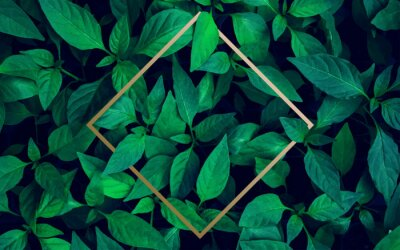 Fototapeta Lots of bright green tropical leaves as a background with a gold stripe in the middle.