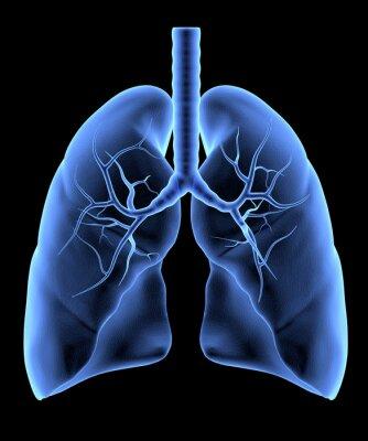 Fototapeta Ludzkich płuc samodzielnie. X-Ray efekt