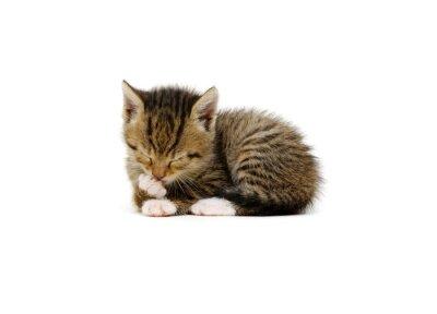 Lying kitten isolated on white