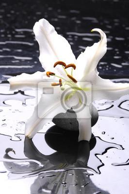 Macro madonna lilia i spa kamień