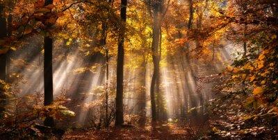 Fototapeta Magiczny efekt oświetleniowy w mglistym lesie jesienią