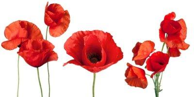 Fototapeta Mak, Kwiat, Czerwony.
