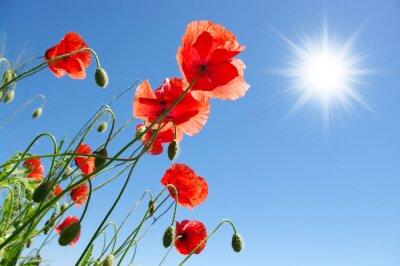 maki w słoneczny dzień