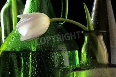 Fototapeta makro biały i żółty tulipan w butelce pokryte kroplami wody na czarnym tle studio