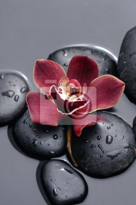 Makro- czerwona orchidea na mokrych czarnych kamieniach