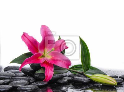 Makro czerwonych lilii z bud i kamienie terapii
