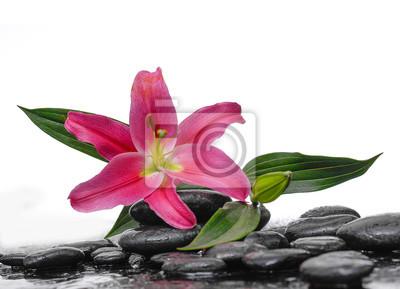 Makro lilii terapii kamieniami