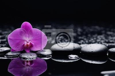 Makro orchidei na mokre czarne kamienie