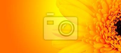 Fototapeta Makro strzał z szczegółowo Gerber kwiat z błyszczącym tle rozmycia