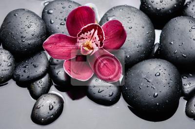 Makro z czerwonym orchidea na mokrej czarnych kamieni