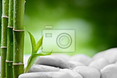 małe bambusowe kiełki na białych kamieniach