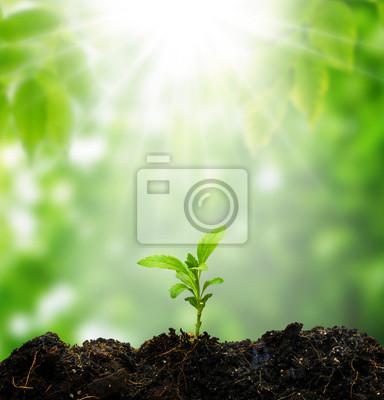 małe drzewo nowe życie