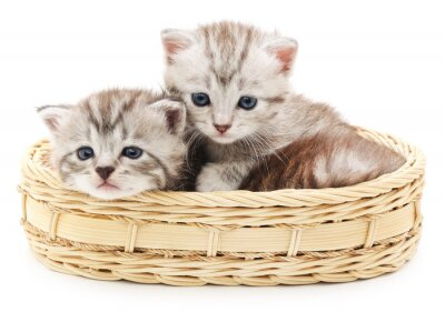 Fototapeta małe kocięta