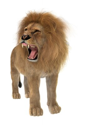 Fototapeta Male Lion