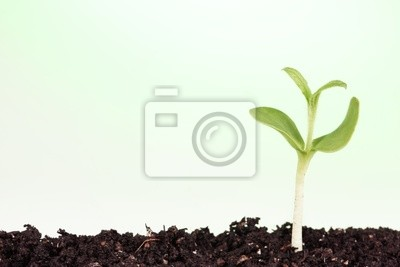 Małe roślin