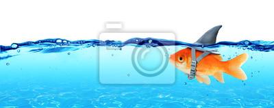 Fototapeta Małe ryby z ambicjami wielkiego rekina - Business Concept