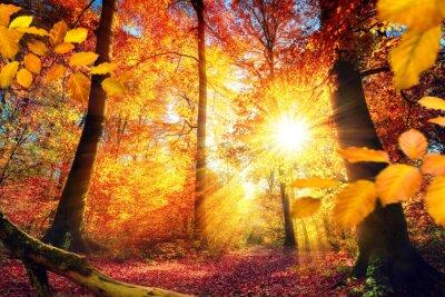Fototapeta Malerischer Herbst im Wald mit viel Sonne und Farben lebendigen