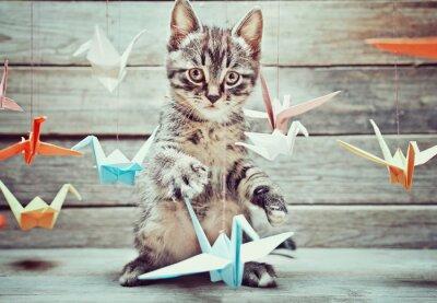 Fototapeta Mały kotek bawi się z kolorowych papierowych żurawi