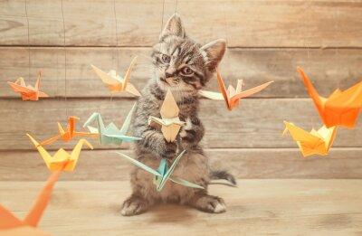 Fototapeta Mały kotek gry z kolorowych ptaków origami