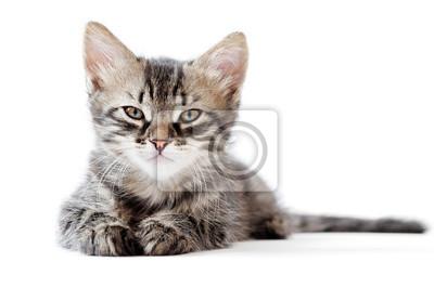 mały kotek na białym tle