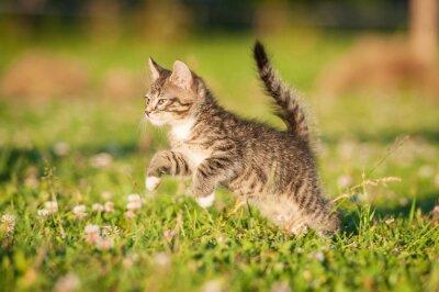 Fototapeta Mały kotek pręgowany działa na trawniku