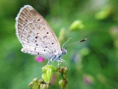 Fototapeta mały motyl w przyrodzie