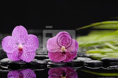 martwa natura z dwoma orchidea na czarne kamienie z zielonych roślin
