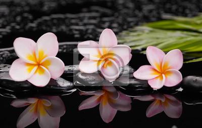 martwa natura z frangipani z zielonymi liśćmi na czarnych kamieniach