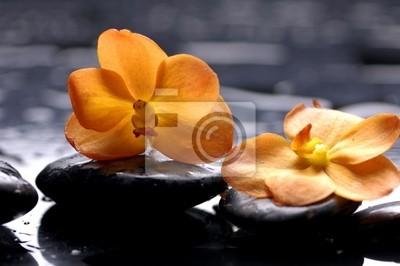 Martwa natura z kwiatu pomarańczy z kroplami wody
