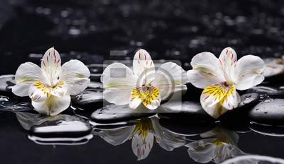 Martwa natura z trzech orchidea z kamieni